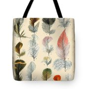 Vintage Feather Study-b Tote Bag