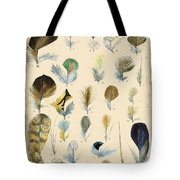 Vintage Feather Study-c Tote Bag