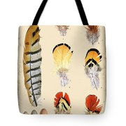 Vintage Feather Study-d Tote Bag