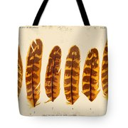 Vintage Feather Study-g Tote Bag