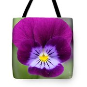 Viola Named Sorbet Plum Velvet Jump-up Tote Bag