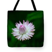 Violet And White Flower Sepals And Bud Tote Bag