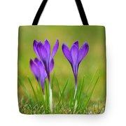 Trio Of Violet Crocuses Tote Bag