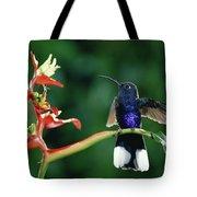 Violet Sabre-wing Hummingbird Tote Bag