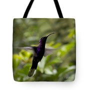 Violet Sabrewing At Cielito Sur Tote Bag