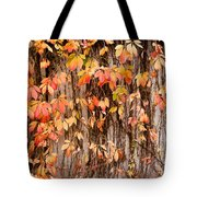 Vitaceae Family Ivy Wall Abstract Tote Bag