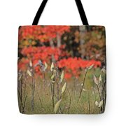 Wachusett Meadows 4 Tote Bag