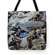 Wadering Tattler At Low Tide Tote Bag