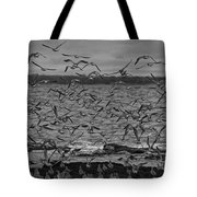 Wading Birds-black And White Tote Bag