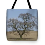 Waiting For Spring - Colour Tote Bag