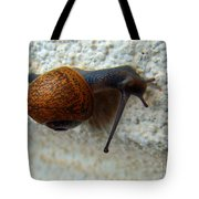 Wall Snail 1 Tote Bag