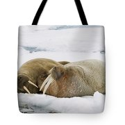 Walrus Male And Female On Ice Floe Tote Bag