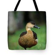 Wandering Whistling Duck Tote Bag