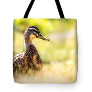 Warm Summer Morning And A Duck Tote Bag