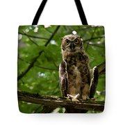 Warm Young Great Horned Owl Tote Bag