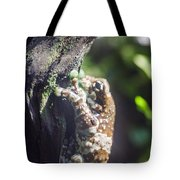Warty Tree Frog Tote Bag