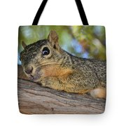 Wary Squirrel Tote Bag