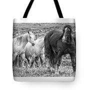 Wary Stallion Tote Bag