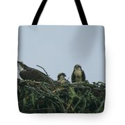 Mother Osprey Watchful Eye  Tote Bag