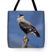 Watchful Eyes Crested Southern Caracara Tote Bag