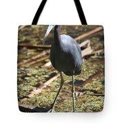 Watchful Little Blue Heron  Tote Bag
