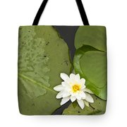 Water Lily 1 Tote Bag