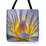 Water Lily 18 Tote Bag