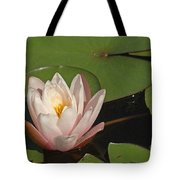Water Lily 5 Tote Bag