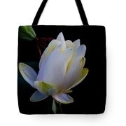 Water Lily Blossom In Shadows Tote Bag