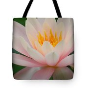 Water Lily II - Close Up Tote Bag
