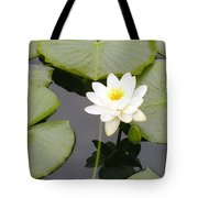 Water Lily I I Tote Bag