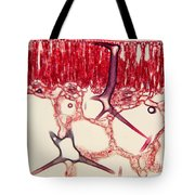 Water Lily Leaf, Lm Tote Bag