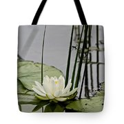 Water Lily Pictures 48 Tote Bag