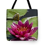 Water Lily Pictures 66 Tote Bag