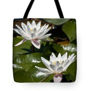 Water Lily Pictures 75 Tote Bag