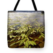 Water Plant Tote Bag