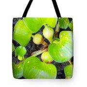 Water Plants 1 Tote Bag