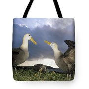 Waved Albatross Courtship Dance Tote Bag