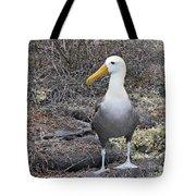 Waved Albatross Diomeda Irrorata Tote Bag