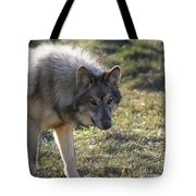 Weary Stance Tote Bag