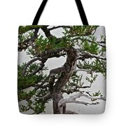 Weathered Bonsai Tote Bag