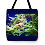 Weedy Sea Dragon Tote Bag