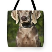 Weimaraner Hunting Dog Tote Bag
