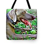 Weimaraner With Tennis Ball Tote Bag