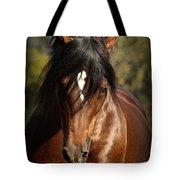 Welsh Cob Stallion Tote Bag