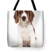 Welsh Springer Spaniel Dog Tote Bag