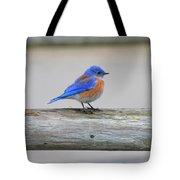 Western Bluebird Perching Tote Bag