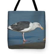 Western Gull Eating Clam Tote Bag
