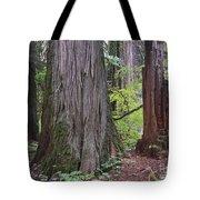 Western Red Cedar Grove Tote Bag