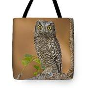 Western Screech Owl Juvenile Utah Tote Bag